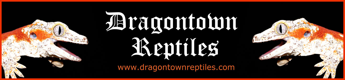 Dragontown Reptiles Banner